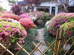 20150505躑躅庭園 014.JPG