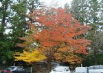 長姫神社の紅葉0911.jpg