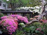 庭のツツジ220501.jpg