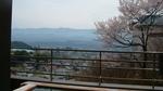 露天風呂からの桜.jpg