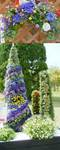 flowergraden.jpg