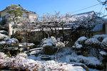 garden20190201.jpg